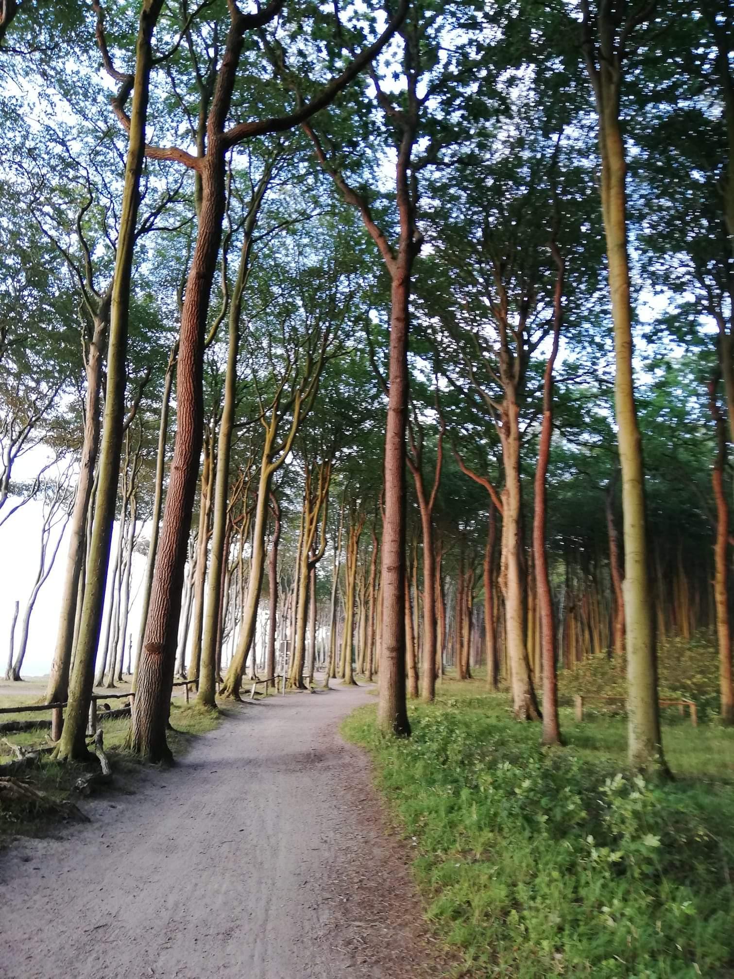 Kliffwald Warnemünde